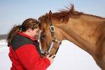 Zima, koń