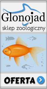 drapak:http://www.zoologiczny.sklep.pl/Drapaki__39_360