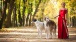 psy na spacerze