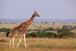 Wycieczka na Safari